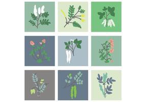 Vettori di fiori di piselli e fagioli
