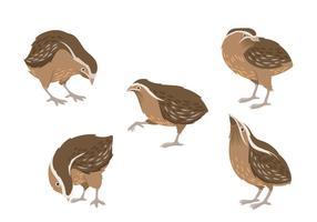 Illustrazione di quaglia marrone vettore
