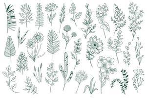 set di elementi decorativi di contorno di fiori selvatici vettore