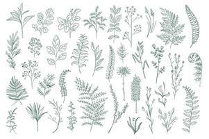 pacchetto di disegno botanico disegnato a mano vettore