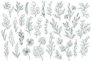 elementi botanici, pacchetto grafico di contorno vettore