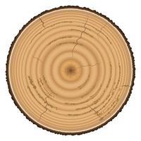 legname di legno isolato su sfondo bianco vettore