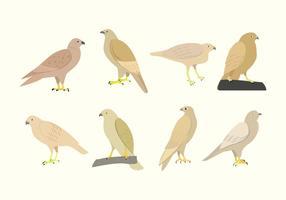 vettore di uccello poiana