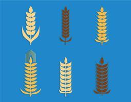 Set vettoriale di spighe di grano