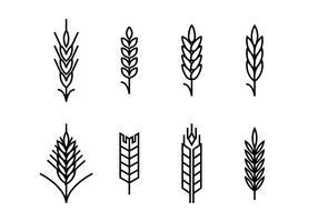 Le orecchie di grano impostano le icone vettore