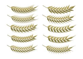 Set di spighe di grano vettore