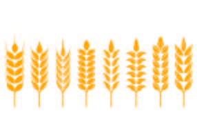Set di icone di spighe di grano vettore