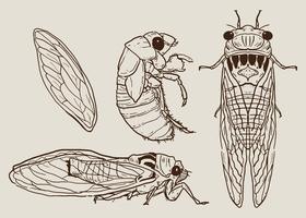 Vettore disegnato a mano stabilito cicala
