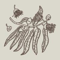 Vettore disegnato a mano dell'albero di gomma