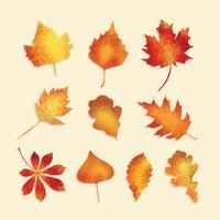 Vettore di foglie autunnali con texture