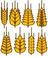 Insieme di vettore di spighe di grano