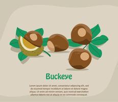 Illustrazione di Buckeye
