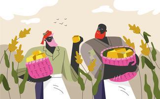 Illustrazione piana di vettore del raccolto dell'agricoltore del sorgo