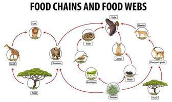 poster educativo di biologia per le reti alimentari e il diagramma delle catene alimentari vettore