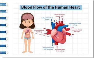 flusso sanguigno del diagramma del cuore umano vettore