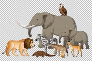 gruppo di animali selvatici africani su sfondo trasparente