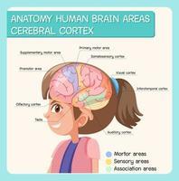 anatomia cervello umano aree corteccia cerebrale con etichetta vettore