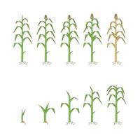 Vettore gratuito di piante di mais