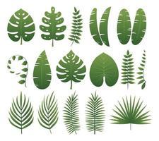 raccolta di foglie tropicali vettore