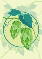 Illustrazione della pianta di luppolo vettore
