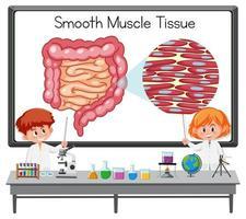 giovane scienziato che spiega il tessuto muscolare liscio davanti a una tavola con elementi di laboratorio vettore