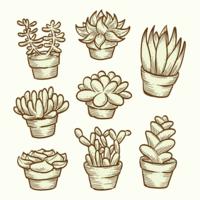 Vettori di piante grasse