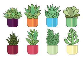 Insieme di vettore di piante grasse