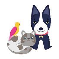 negozio di animali, cane nero, gatto e uccello animali domestici dei cartoni animati vettore