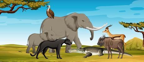 gruppo di animali selvatici africani nella scena della foresta vettore