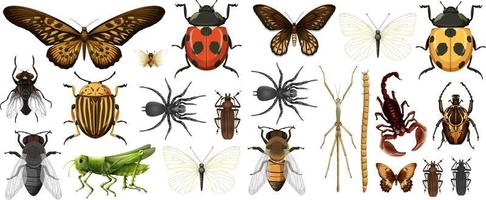 raccolta di insetti diversi isolati su sfondo bianco vettore