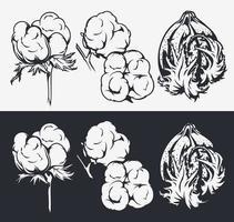 set di illustrazioni botaniche. fiori di cotone vettore