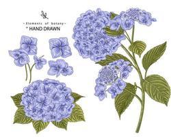 elementi disegnati a mano di fiori di ortensia vettore