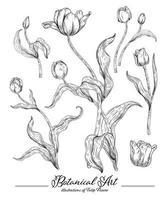 elementi disegnati a mano del fiore del tulipano vettore