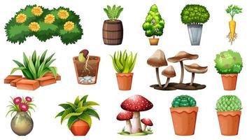 insieme di diverse piante in vaso isolato su sfondo bianco vettore