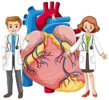 cuore umano con due personaggi dei cartoni animati medico vettore