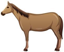 un cavallo in stile cartone animato isolato su sfondo bianco