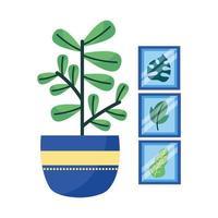 pianta isolata e cornici disegno vettoriale