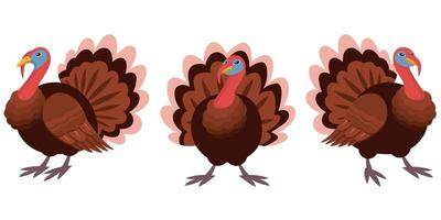 gobbler in diverse pose.