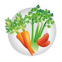 carota sedano e pomodoro disegno vettoriale