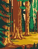 alberi di sequoia nel parco in sierra nevada california poster art