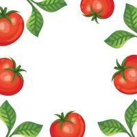 cornice di pomodori freschi e foglie vettore