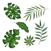 insieme di rami con foglie tropicali