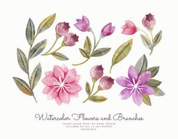Vettore acquerello fiori e rami