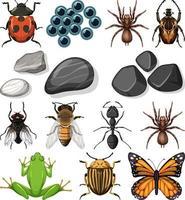 diversi tipi di insetti con elementi della natura vettore