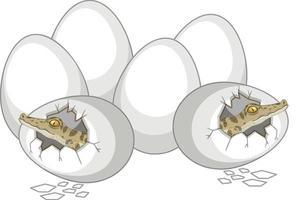 due alligatori appena fuori uovo con altre uova isolate su sfondo bianco vettore