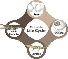 diagramma del ciclo di vita del coccodrillo vettore