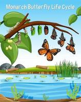 scena con ciclo di vita della farfalla monarca vettore