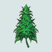 pianta di foglia di cannabis medica vettore