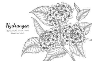 illustrazione botanica disegnata a mano del fiore e della foglia dell'ortensia con la linea arte su fondo bianco vettore