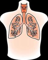 illustrazione dei polmoni vettore